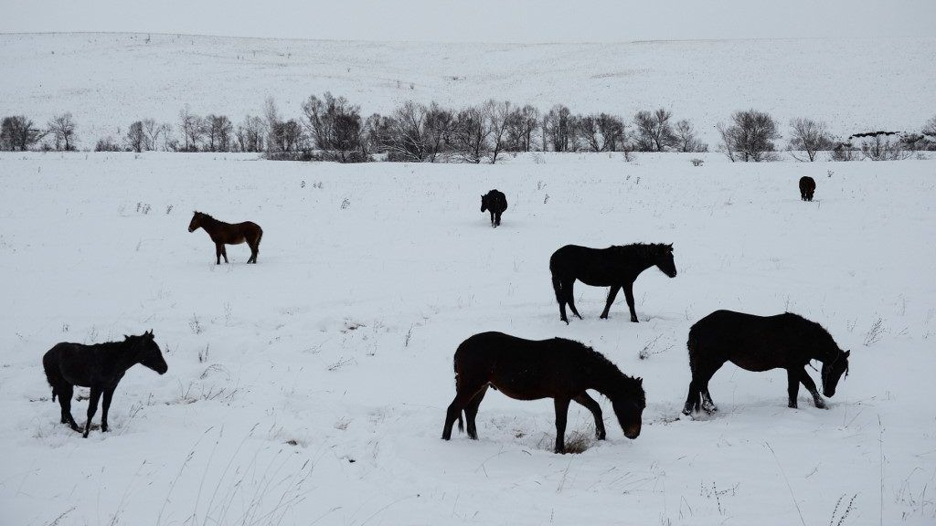 Szibériába is beütött a klímaváltozás
