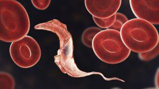 korbféreg fertőzés útjának kezelése