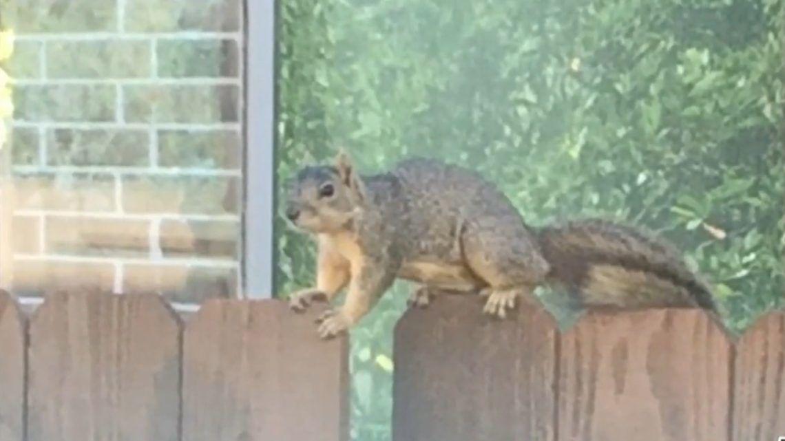 Vérszomjas mókus tart rettegésben egy amerikai várost