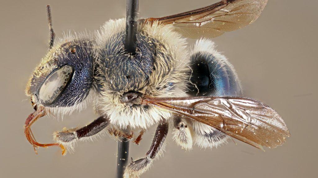 A méheket így menthetjük meg - HáziPatika