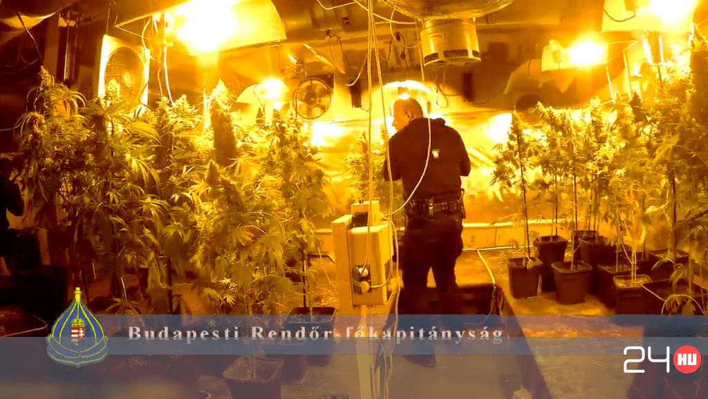 Videó: 150 millió forintnyi kábítószert találtak egy budafoki dílernél | 24.hu