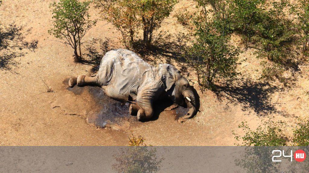 mi az elefántok látványa)