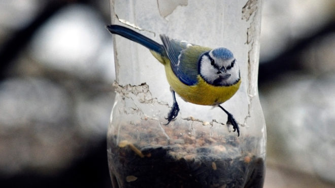 madár, amelynek hattyúja van