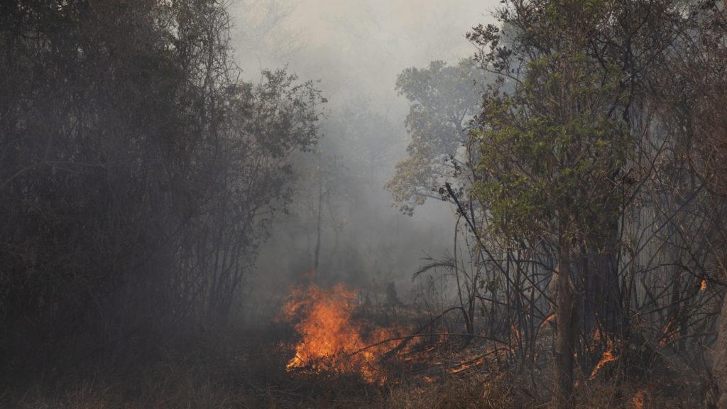 Izraelnyi területről tűnt el az erdő Amazóniában