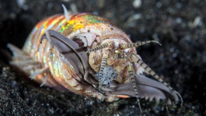 belső és külső paraziták állatokban