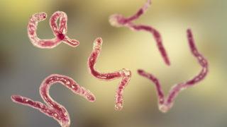 Világ: Parazita az agyban: erősebb, mint hitték | turizmusbarcs.hu