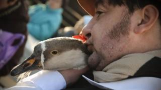 Hajdúböszörmény, 2011. november 12. Rácz Tibor puszit ad Grünhilda nevû libája nyakára Hajdúböszörményben, a Márton-napi Galiba lúdszépségversenyen. MTI Fotó: Czeglédi Zsolt