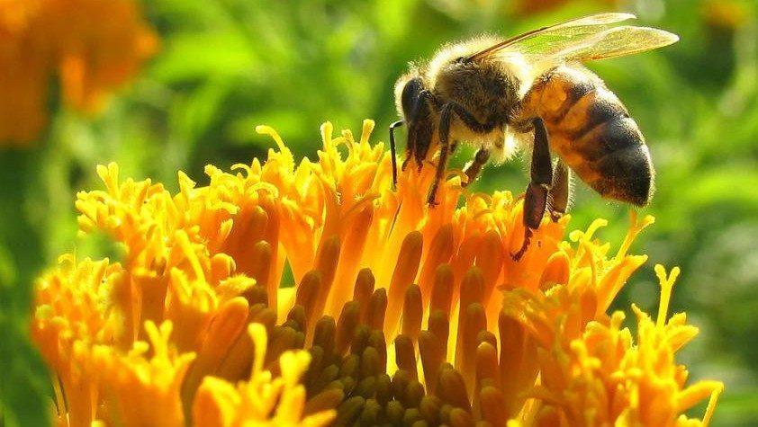 mi a méhek látványa