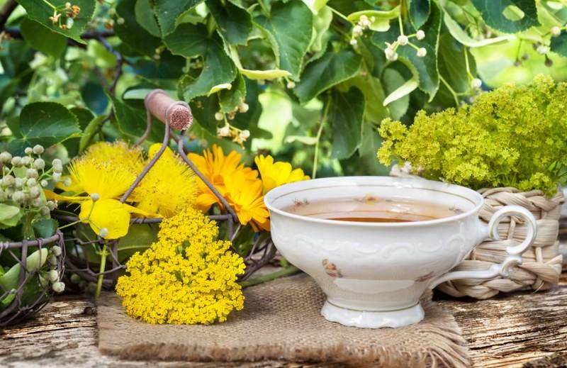 Tasse Kräutertee und Heilpflanzen