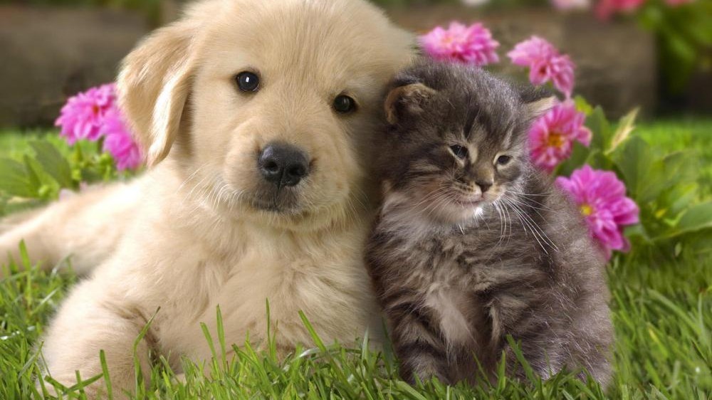 Még hogy nincs kutya-macska barátság? De mennyire van ...