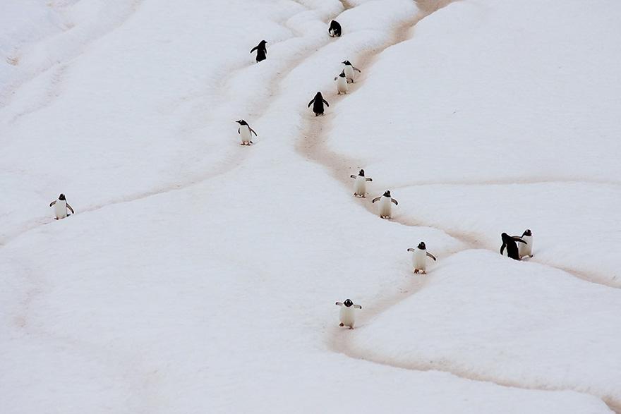 penguin-awareness-day-photography-111