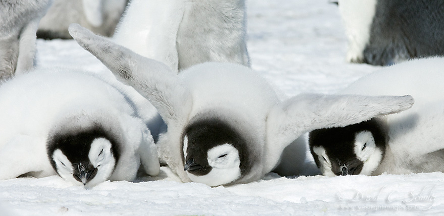 penguin-awareness-day-photography-131