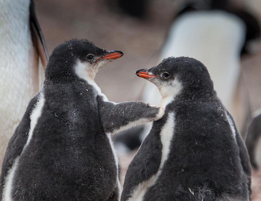 penguin-awareness-day-photography-141