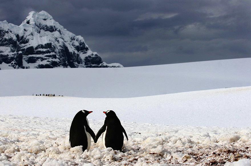 penguin-awareness-day-photography-161