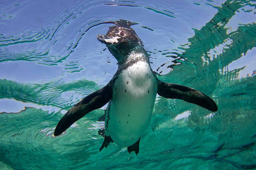 penguin-awareness-day-photography-171