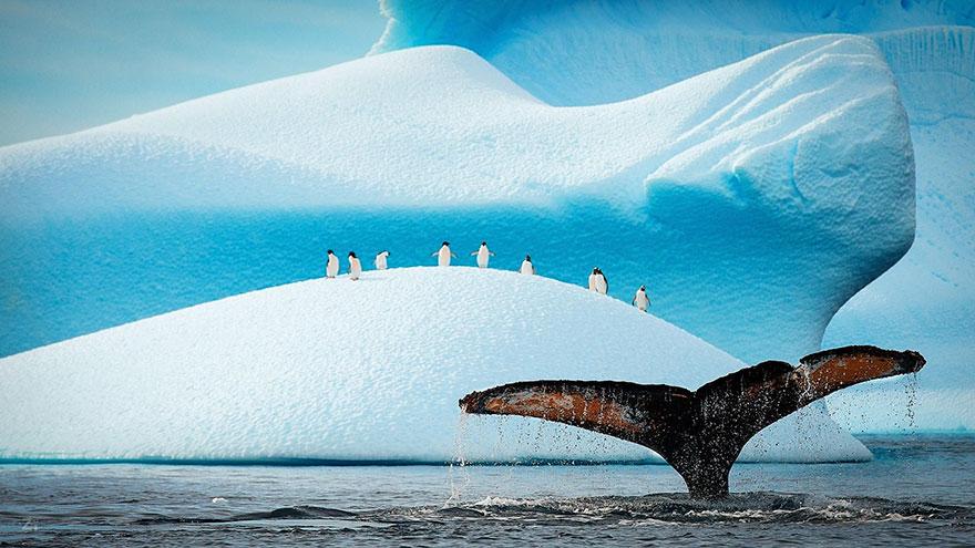 penguin-awareness-day-photography-21