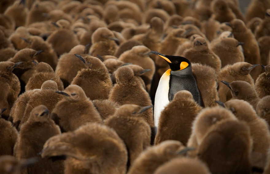 penguin-awareness-day-photography-41