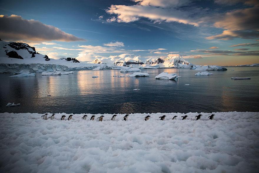penguin-awareness-day-photography-51