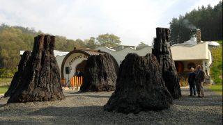 Ipolytarnóc, 2007. október 12. A 8 millió éves mocsárciprusok a megújult Ipolytarnóci Õsmaradványok Természetvédelmi Terület látogatóközpontja elõtt. MTI Fotó: H. Szabó Sándor