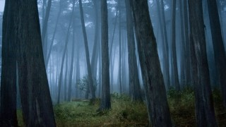 Clearing in Cypress tree forest