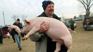 Ónod, 2012. március 1. Malacot visz a kezében egy férfi az ónodi állatvásáron, amelyet az országos állat- és kirakodóvásár részeként minden hónap elsõ csütörtökén tartanak a településen. MTI Fotó: Vajda János
