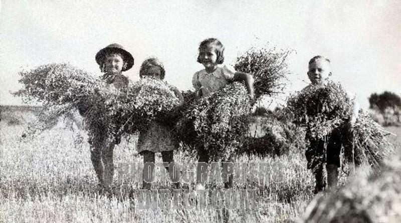World War II  Evacuee children , 1940 . Evacuee children help a farmer bring in the harvest ,  near Bristol .