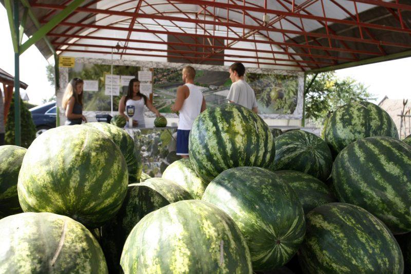 Jászapáti, 2015. július 7. Magyar görögdinnye egy árusítóhelyen Jászapátiban 2015. július 7-én. MTI Fotó: Bugány János