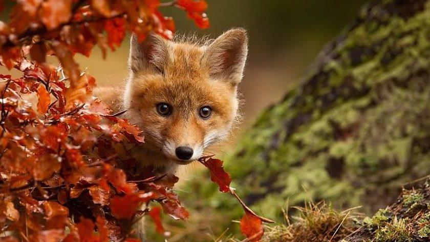 """Képtalálat a következőre: """"ősz"""""""