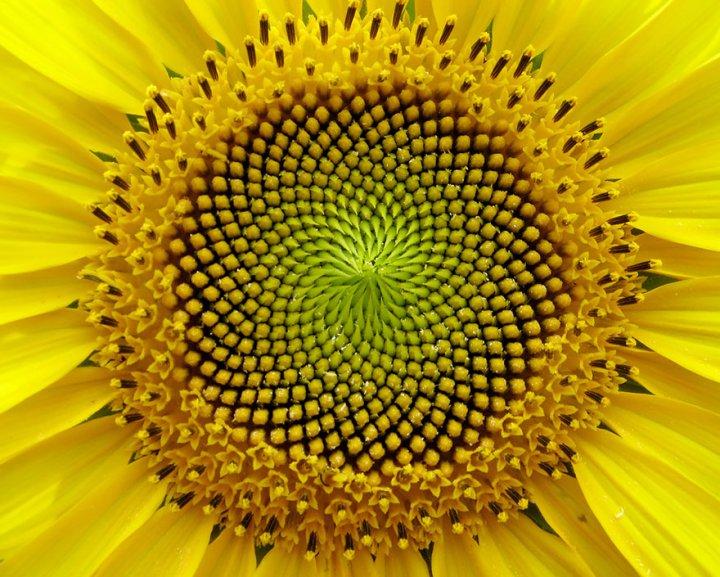 13 A természet bölcsessége megmutatkozik a szakrális geometriában is.
