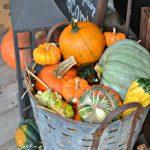 5-pumpkins-in-vintage-olive-bucket-1.jpg