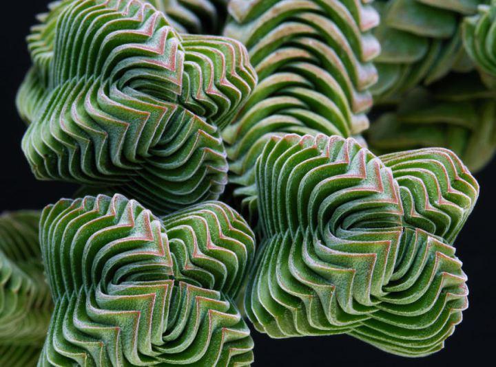 8 A természet bölcsessége megmutatkozik a szakrális geometriában is.