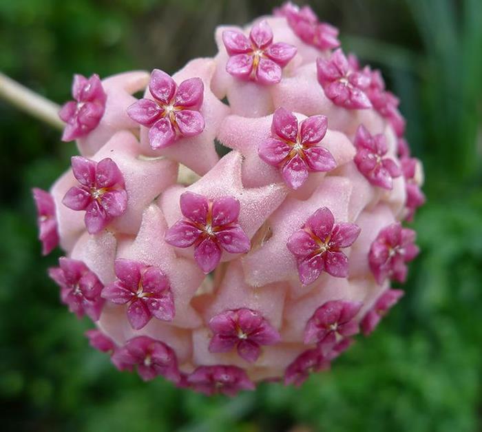 ba-bamail A természet bölcsessége megmutatkozik a szakrális geometriában is.