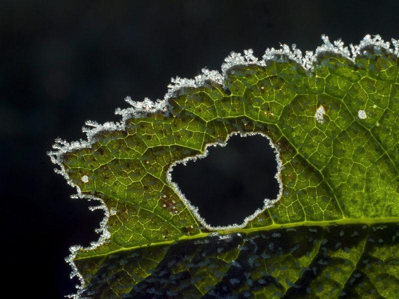Ságújfalu, 2016. október 5. Esõzés után növényre fagyott víz Ságújfalu közelében 2016. október 5-én. MTI Fotó: Komka Péter