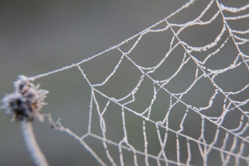 Homokkomárom, 2016. október 8. Deres pókháló egy legelõn, Homokkomárom közelében 2016. október 8-án, napfelkeltekor. A térségben ezen a napon fagyott elõször, hajnalban mínusz 4 fokot mértek. MTI Fotó: Varga György
