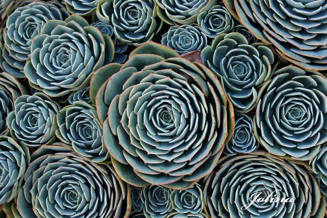 jolina A természet bölcsessége megmutatkozik a szakrális geometriában is.