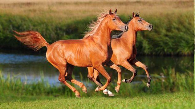Így látnak a lovak - motiver.hu