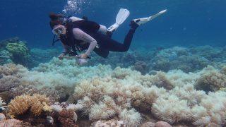Queensland állam, 2017. április 10. Az Ausztrál Kutatási Tanács Excellence for Coral Reef Studies Központja által közreadott dátumozatlan képen az ausztráliai Nagy Korallzátony sérült koralljai Queensland államban. Egy levegõbõl végzett vizsgálat 2017 áprilisában közreadott eredménye szerint korábban sohasem látott korallfehéredés sújtja a Nagy Korallzátony északi és középsõ harmadát. (MTI/EPA/ARC Centre Coral Reef Studies/Ed Roberts)