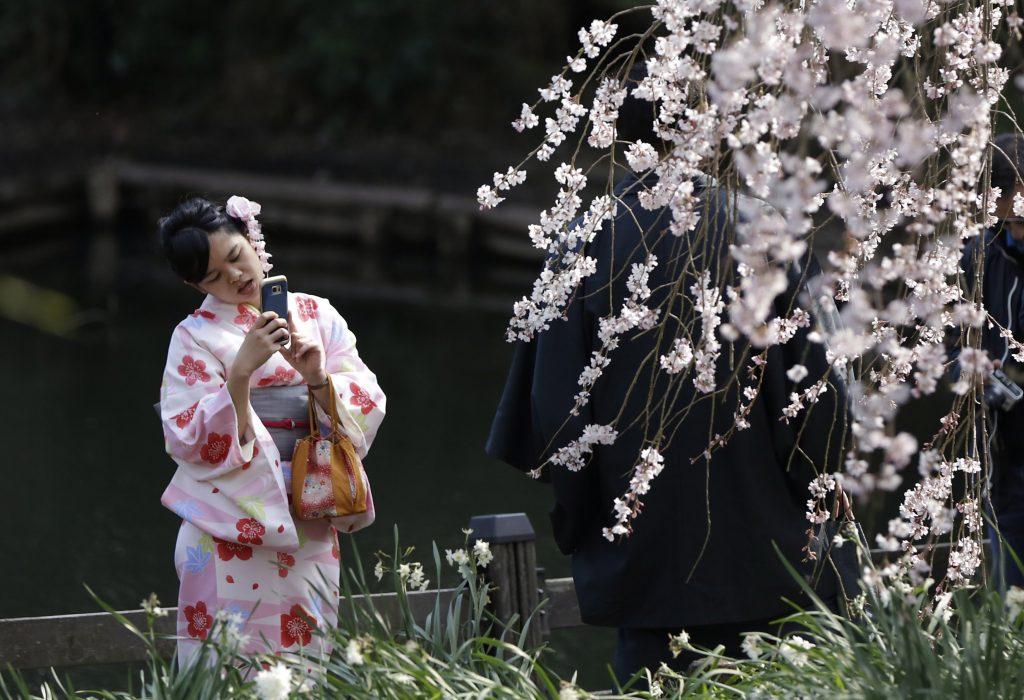 Tokió, 2017. március 28. Virágba borult cseresznyefaágakat fényképez egy látogató egy tokiói parkban 2017. március 28-án. (MTI/AP/Eugene Hoshiko)