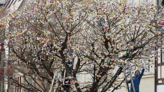 Saalfeld, 2017. április 2. Egy férfi felrak egy tojást a közel tízezer festett tojással feldíszített fára a kelet-németországi Saalfeldben 2017. április 2-án. (MTI/AP/Jens Meyer)