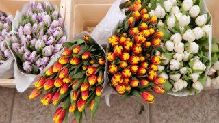 Budapest, 2012. március 5. Tulipánok a Budapesti Virágpiacon.  MTI Fotó: Koszticsák Szilárd