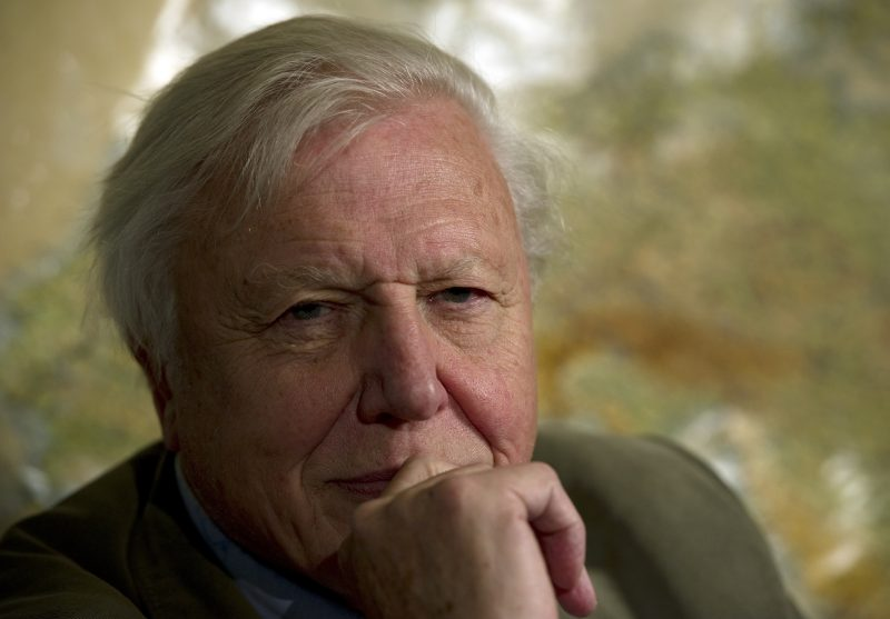 British broadcaster David Attenborough poses for a picture at an event to celebrate the Scott Antarctic Expedition Centenary with the launch of 'Edward Wilson's Antarctic notebooks' in London on November 17, 2011. AFP PHOTO / ADRIAN DENNIS / AFP PHOTO / ADRIAN DENNIS
