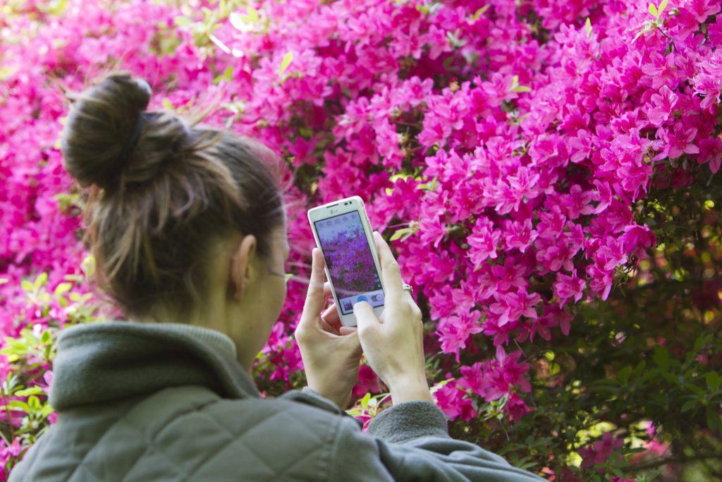 Kiscsehi, 2017. május 9. Virágzó rododendront fényképez okostelefonjával egy látogató a Budafapusztai Arborétumban 2017. május 9-én.  MTI Fotó: Varga György