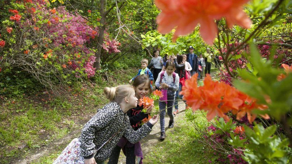 Kiscsehi, 2017. május 9. Virágzó rododendront néznek diákok a Budafapusztai Arborétumban 2017. május 9-én.  MTI Fotó: Varga György