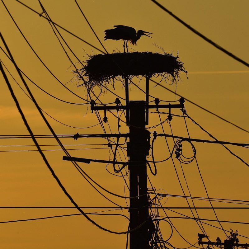 Balmazújváros, 2017. május 29. Fehér gólya (Ciconia ciconia) naplementekor Balmazújvárosban 2017. május 29-én. MTI Fotó: Czeglédi Zsolt