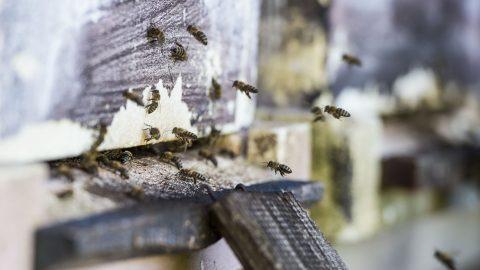 Baj, 2017. május 27. Méhkaptár bejárata egy Baj közelében lévõ méhészetében 2017. május 27-én. MTI Fotó: Bodnár Boglárka