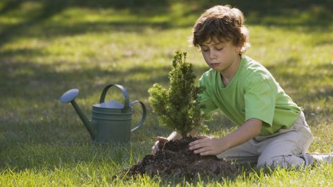 Boy planting a tree