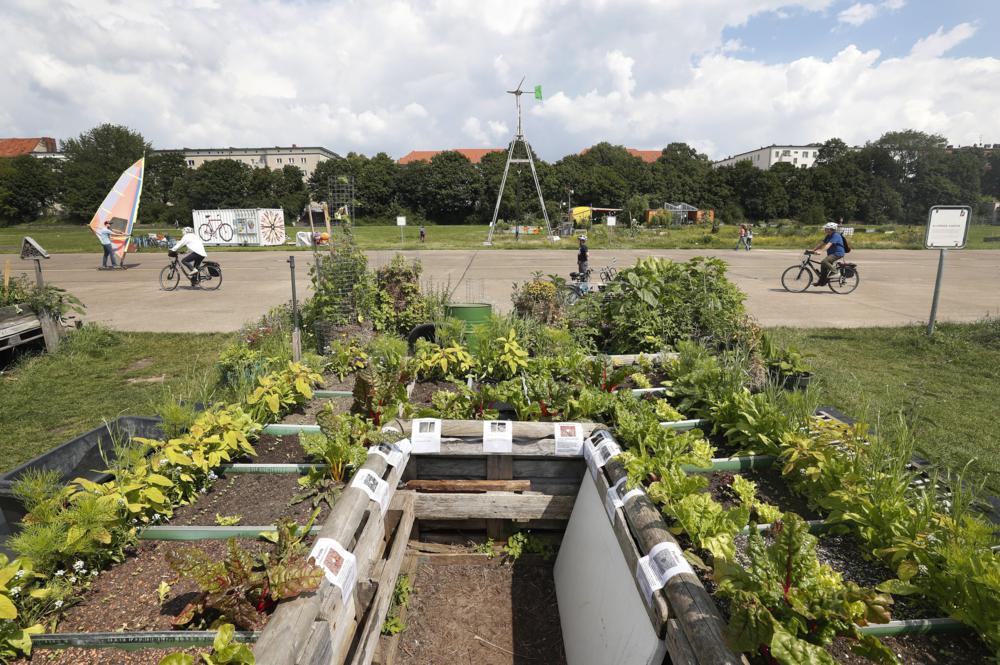 Berlin, 2017. július 16. Növények az Allmende-Kontor városi közösségi kertben a berlini Tempelhof repülõtér közelében 2017. július 14-én. A Vattenfal skandináv energetikai cég két kommunális zöldterületet nyitott meg Berlinben, ahol a városlakók egy földterületen osztozva szabadon kertészkedhetnek, megtermeszthetik maguknak a friss zöldséget, gyümölcsöket és a fûszernövényeket. (MTI/EPA/Felipe Trueba)