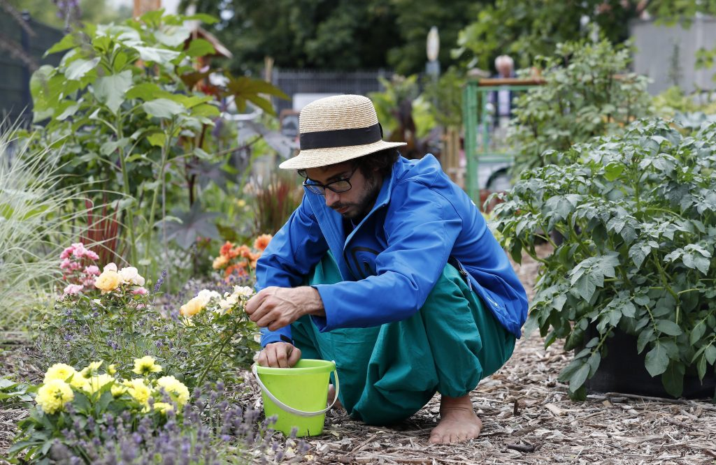 Berlin, 2017. július 16. Egy férfi gyomlálja a virágokat a berlini Vattenfall városi közösségi kertben 2017. július 14-én. A Vattenfal skandináv energetikai cég két kommunális zöldterületet nyitott meg Berlinben, ahol a városlakók egy földterületen osztozva szabadon kertészkedhetnek, megtermeszthetik maguknak a friss zöldséget, gyümölcsöket és a fûszernövényeket. (MTI/EPA/Felipe Trueba)