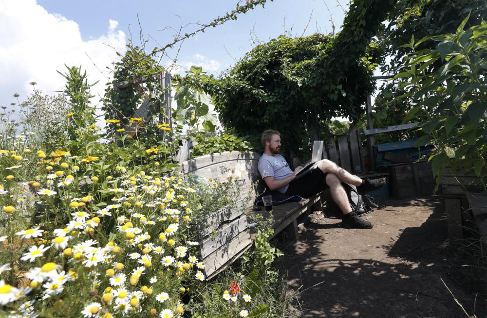 Berlin, 2017. július 16. Egy férfi laptopjával a berlini Vattenfall városi közösségi kertben 2017. július 14-én. A Vattenfal skandináv energetikai cég két kommunális zöldterületet nyitott meg Berlinben, ahol a városlakók egy földterületen osztozva szabadon kertészkedhetnek, megtermeszthetik maguknak a friss zöldséget, gyümölcsöket és a fûszernövényeket. (MTI/EPA/Felipe Trueba)