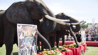 Balatonlelle, 2017. július 15. A Magyar Nemzeti Cirkusz elefántjai gyümölcsöt esznek a Cirkuszok éjszakája rendezvényen Balatonlellén 2017. július 15-én. MTI Fotó: Varga György